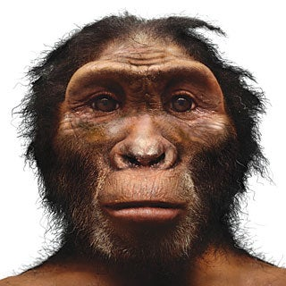 The Human Pedigree: A Timeline of Hominid Evolution: Scientific ...