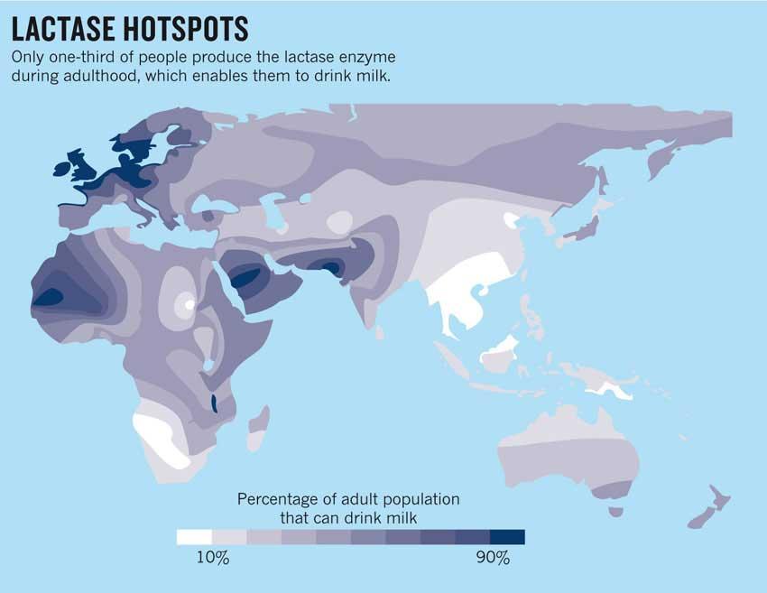 Lactase hotspots