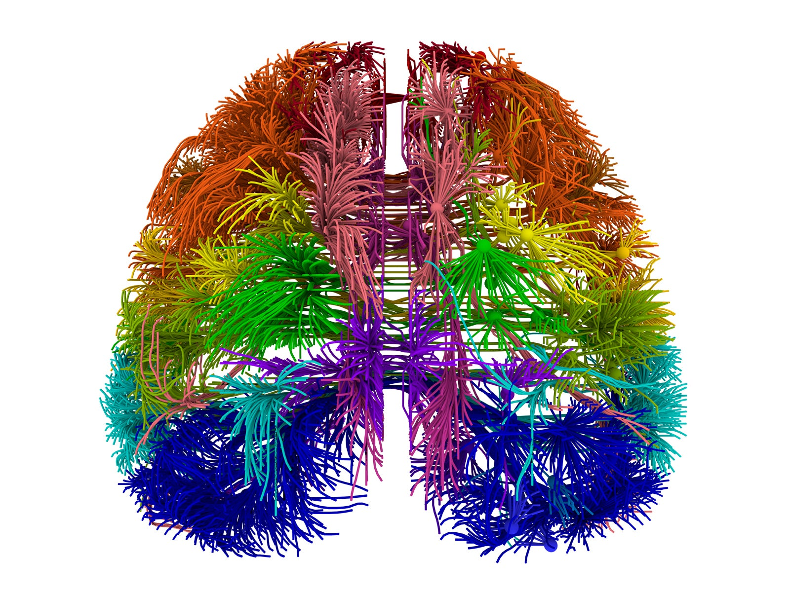 brain science years virtual scientific allen visualized distinct originating cortical cortico tractography connections areas multiple down
