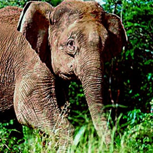 Elephant Relocation Scheme Fails to Prevent Deaths