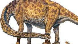 Dinosaur Bones Show They Grew Quickly