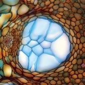 ALOIN CELLS: