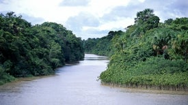 Massive Survey Creates Amazon Tree Census