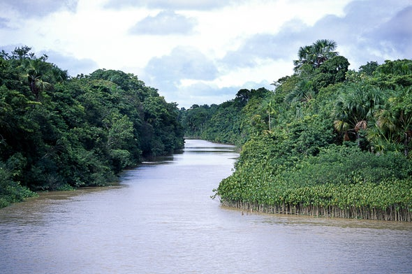 Massive Survey Creates Amazon Tree Census