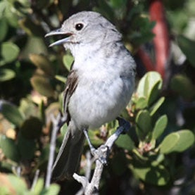 Climate Change May Shift Composition of U.S. Bird Species