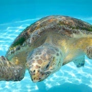 How to Stop Sex Changes in Turtles on the Great Barrier Reef