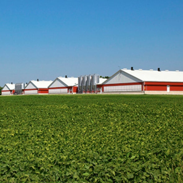 """Farming the Future: GM Crops Recommended as Key Part of Obama's """"Evergreen Revolution"""""""