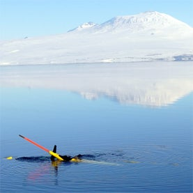 Bloom with a View: Robot Subs Help Researchers Study Mysterious Antarctic Sea Life [Slide Show]