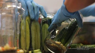 What Makes a Cucumber a Pickle?