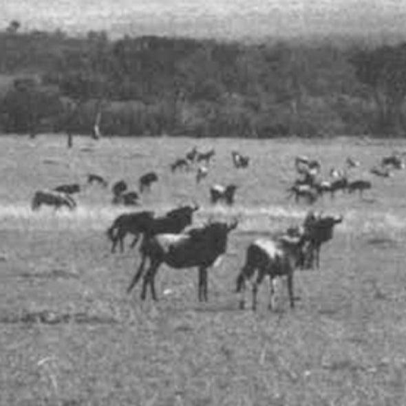 50 Years Ago: Wildlife Husbandry in Africa