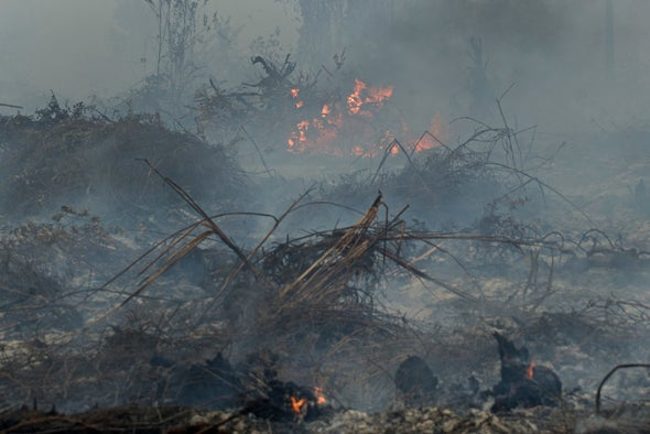 Forest Fires Stoke Record Loss in World Tree Cover