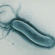 Stopping Infections: The Art of Bacterial Warfare