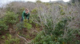 Invisible Killers Hitchhike on Native Plant Seedlings