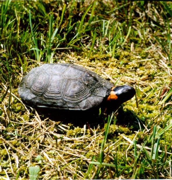 Connecticut Turtle Atlas