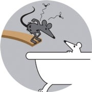 Lab Mice Are Poor Models of the Human Immune System