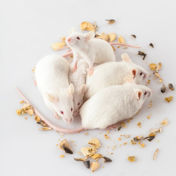 Depressed Mice Have Excitable Neurons