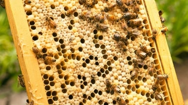 Up to One Third of Honeybee Colonies Dies per Year in Europe