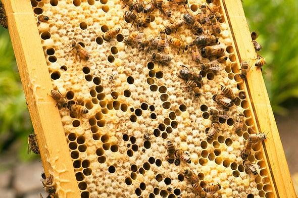 Up to One Third of Honeybee Colonies Dies per Year in Europe