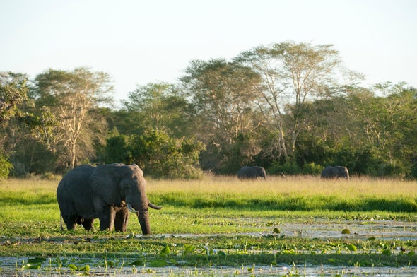 Protected Wildlife Is a Major Casualty In War-Torn Areas of Africa