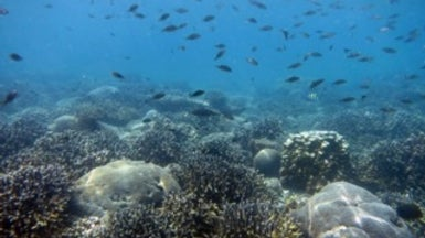 Hot Water Corals in the Persian Gulf Could Help Save the World's Reefs