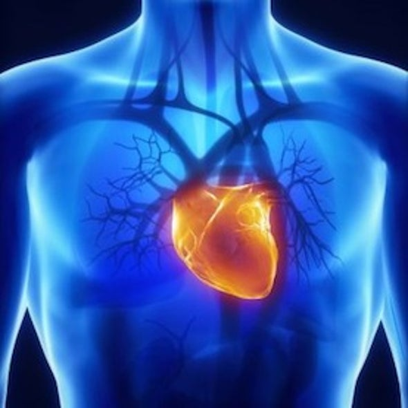 """Lab-Made Heart Represents """"Moonshot"""" for 3-D Printing"""