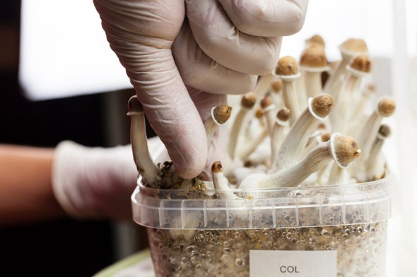 Johns Hopkins Scientists Give Psychedelics the Serious Treatment