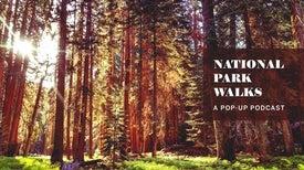 National Park Nature Walks, Episode 4: Beautiful Swamp