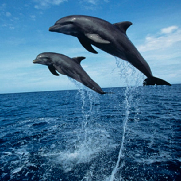 Flipped Off: Pollution and Overfishing Spell Trouble for Dolphins Worldwide