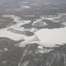 boreal-forest-from-air