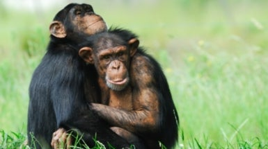 Sexually monogamous primates