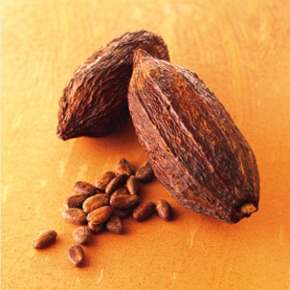 Is Cocoa the Brain Drug of the Future?