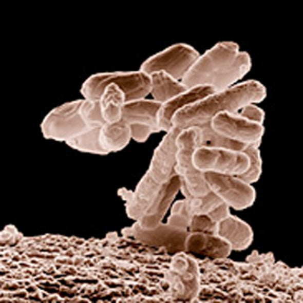<i>E. Coli</i> Strain Linked to Cancer in Mice