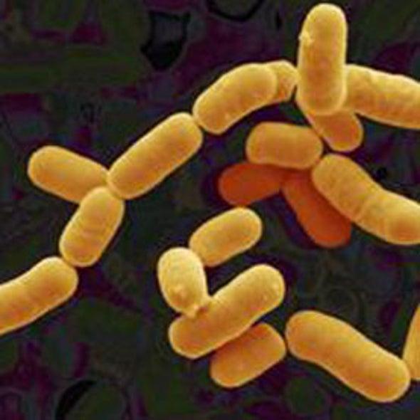 Friendly Bacteria Cheer Up Anxious Mice