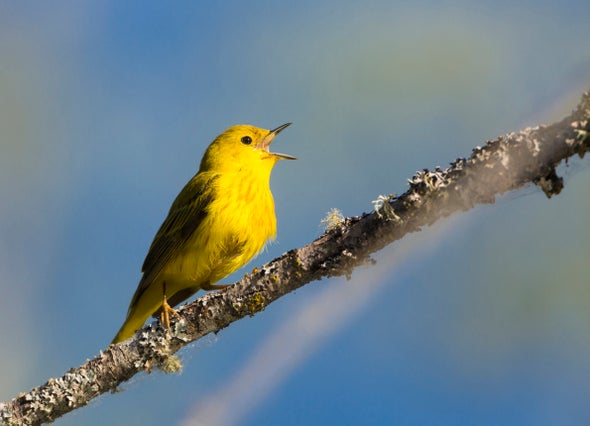 Red-Winged Blackbirds Understand Yellow Warbler Alarms