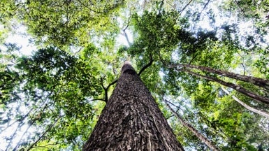 The Amazon Trees That Do the Most to Slow Global Warming