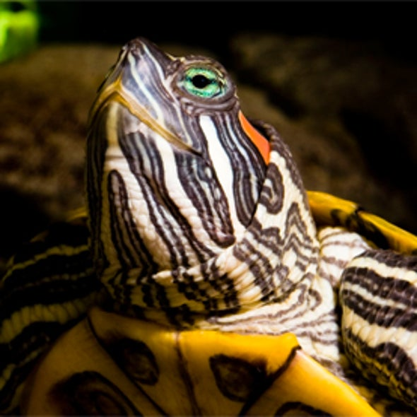 Are the World's Reptile Species in Trouble?