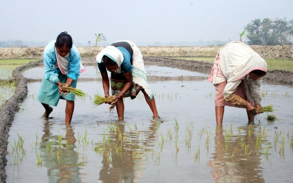 Crops That Grow in Salty Water [Video]