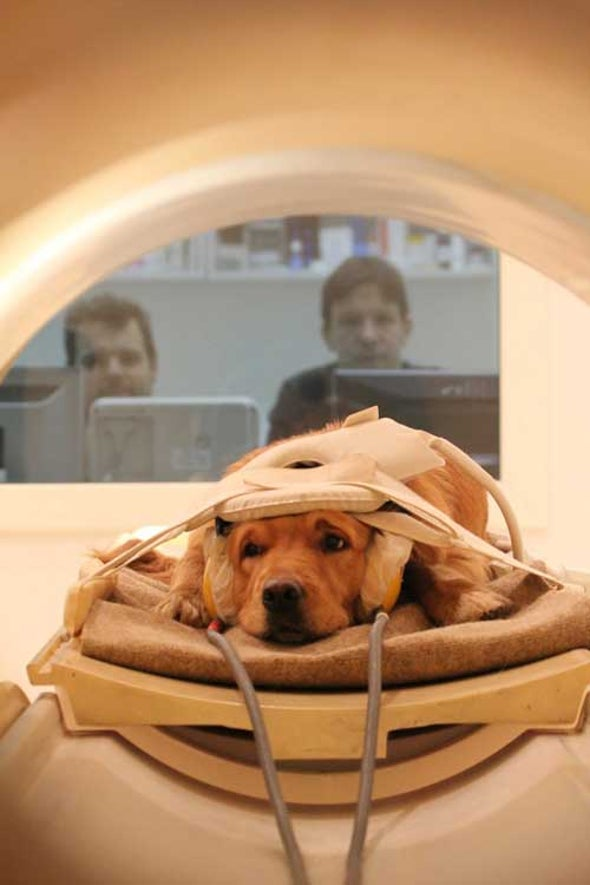 Feeling Simpatico with Your Dog? It May Be Based on Similar Human–Canine Brain Structures