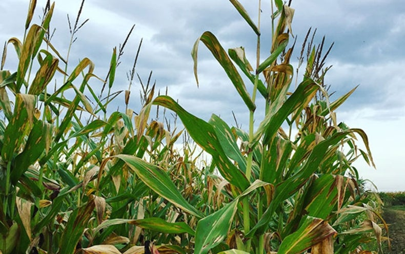 Whatever Happened to Advanced Biofuels? - Scientific American