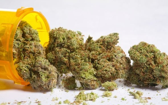 Can Cannabis Solve the Opioid Crisis?