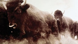 """Bison """"Vote"""" on the Direction They'd Like the Herd to Move"""