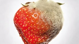 Plant vesicles inspire methods to protect crops