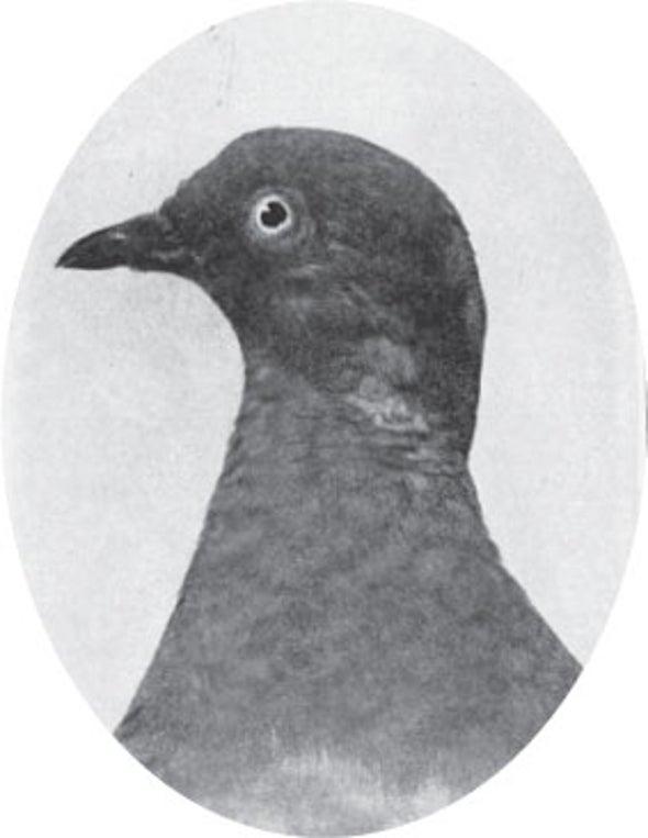 Evolution versus Creation; Extinction of the Passenger Pigeon