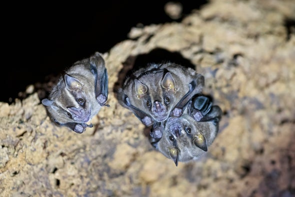 Sick Vampire Bats Restrict Grooming to Close Family