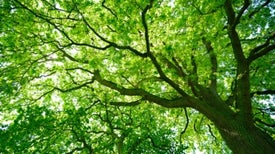 How Many Trees Are There in the World? [Video]