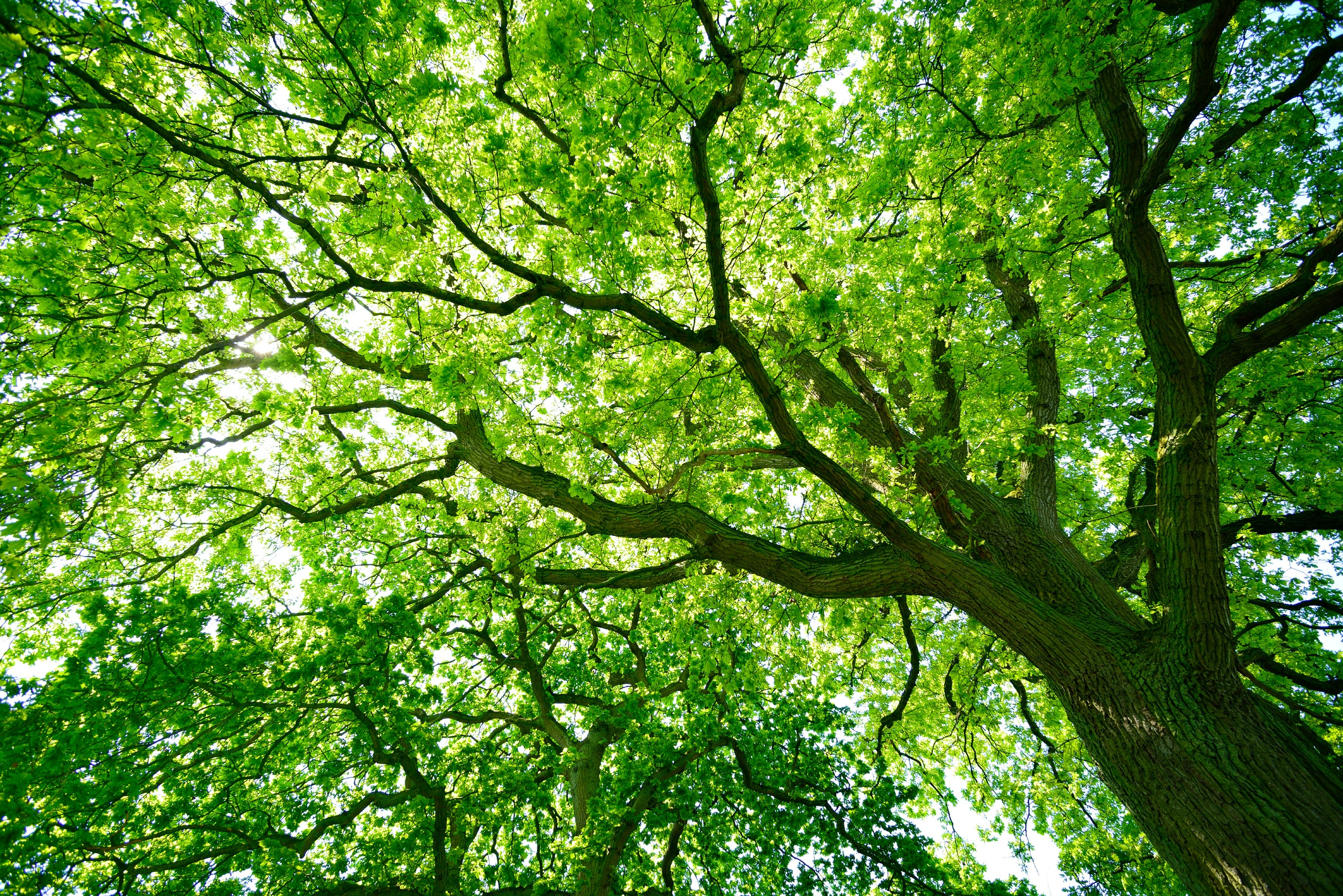 How Many Trees Are There In The World Video Scientific American