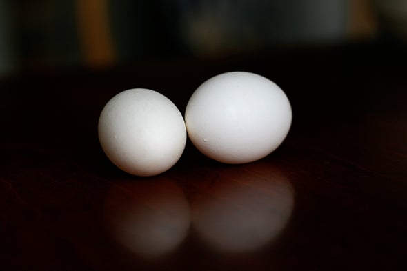 Unboiled Egg Untangles a Knotty Protein Problem