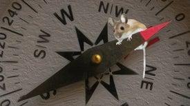 Mouse Senses Magnetic Fields Possibly via Quantum Processes