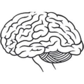 brain, brain drawing