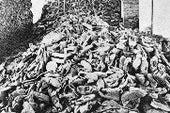 一位生物学家重建了纳粹杀人机器的怪诞效率。